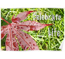 Celebrate Life With A Japanese Maple Leaf  Poster