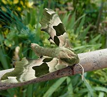 Green Moth on the Pole by LoneAngel