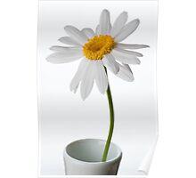 White Chrysanthemum 1 Poster