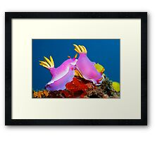 United Colors Framed Print