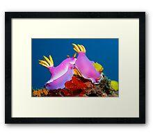 United Colors Framed Print