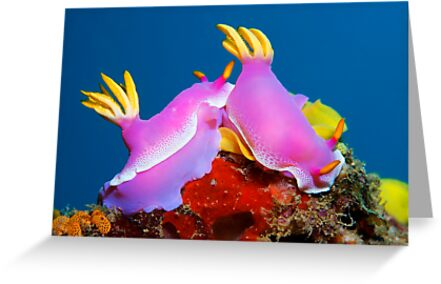 United Colors by Norbert Probst