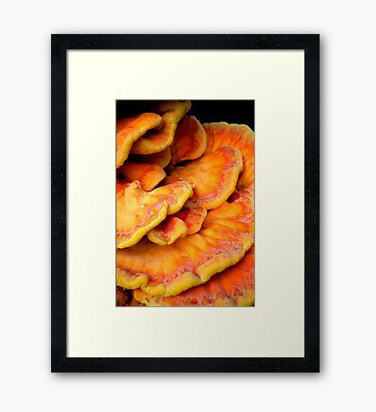 Pandorica Fungus Framed Print