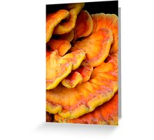 Pandorica Fungus Greeting Card