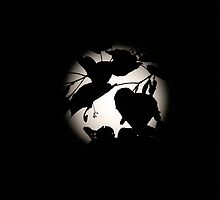 Silhouetted Leaf by Al Mechler