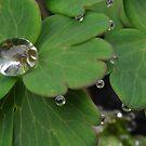 droplets by Jari Hudd