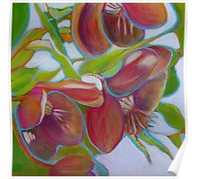 Helleborus Orientalis, mixed media on canvas Poster