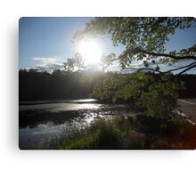 Sun Shining Through Branches Canvas Print