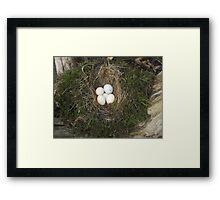 Old Bird Nest Framed Print