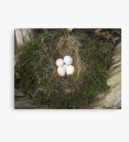 Old Bird Nest Canvas Print