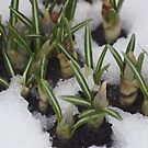 First Day Of Spring???? by Lorelle Gromus