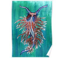 Flabellina sp. Poster