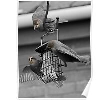Lunch Time for the Birds Poster