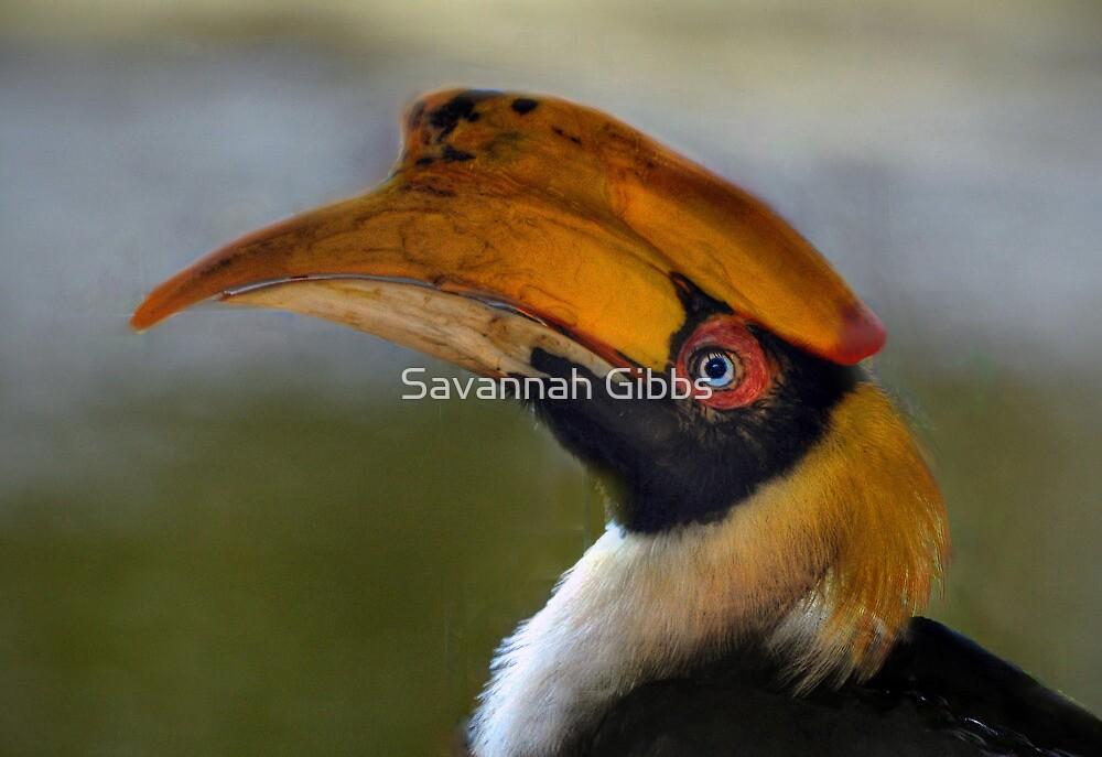 Great Hornbill by Savannah Gibbs