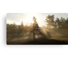 Sunrise bursting through trees and mist Canvas Print