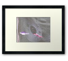 Beautiful Spider Web Framed Print