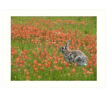 Indian Paintbrush With Bunny Art Print