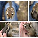 Morning With Chippy by Betsy  Seeton