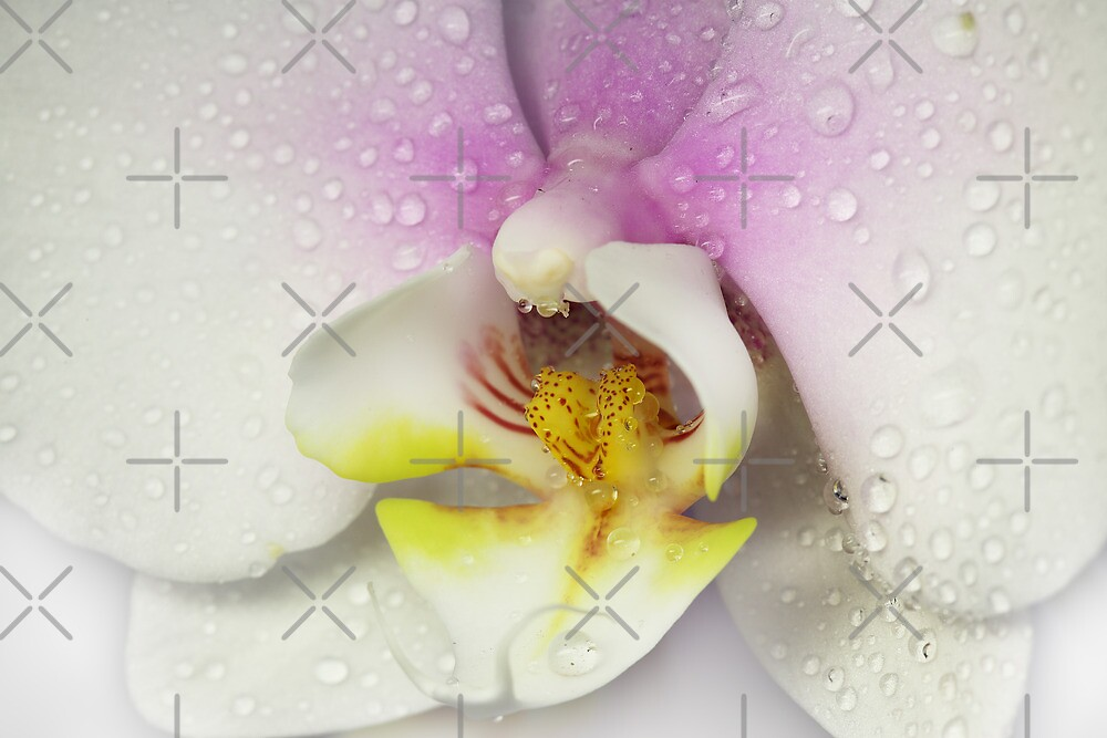 My Orchid by EbyArts