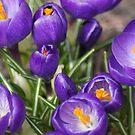 Springtime Jewels by Lorelle Gromus
