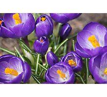 Springtime Jewels Photographic Print