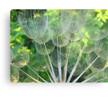 Dried Oyster Flower  Metal Print