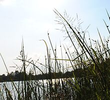 Through the Reeds by mxl5213