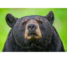 Bear Stare Photographic Print