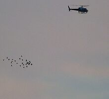 Helicopter Migration by Monte Roberts