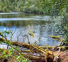 Lake Chisholm in Tarkine wilderness by Roger Neal