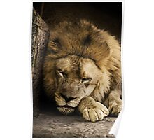 Napping Poster