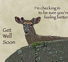 Get Well Card - Whitetail Deer in Velvet by MotherNature