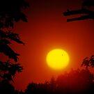 Silhouette of Venus by Mark Bolen