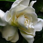 Spirit me away with the scent of Gardenias by MarianBendeth