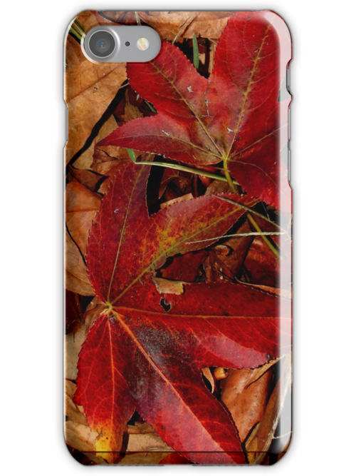 Fall - iPhone case by MikeO