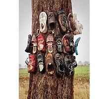 Shoe tree Photographic Print