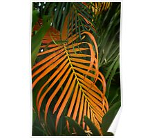 dried palm leaf Poster
