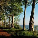 Dreamtrees near the sea by jchanders