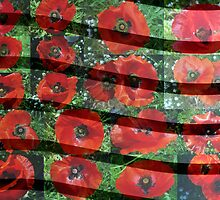 Red Flanders Poppies Collage with Lines by alycanon