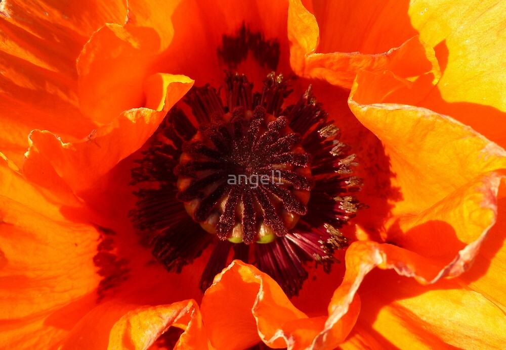 Poppy Detail by ©The Creative  Minds