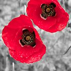 Black & White Colour Splash Poppies by Lucas Modrich