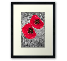 Black & White Colour Splash Poppies Framed Print