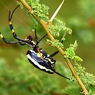 Not exactly Incy Wincy by Graeme M