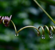 Wet passion by John Spies