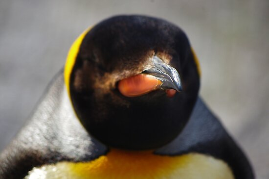 Emperor Penguin  by Samantha Sheldon