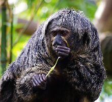 Monkey  by Samantha Sheldon