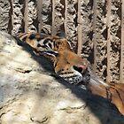Tiger by Jennifer  Arganbright