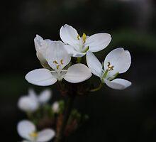 White Flower by Samantha Sheldon