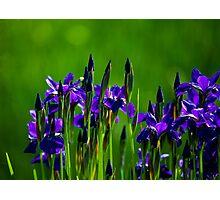 I love Purple! Photographic Print