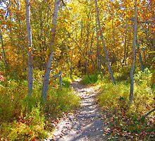 Autumn Trail by Jim Sauchyn